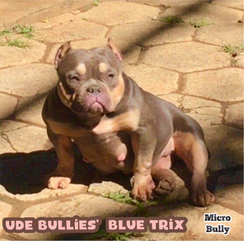 Bully Pedex